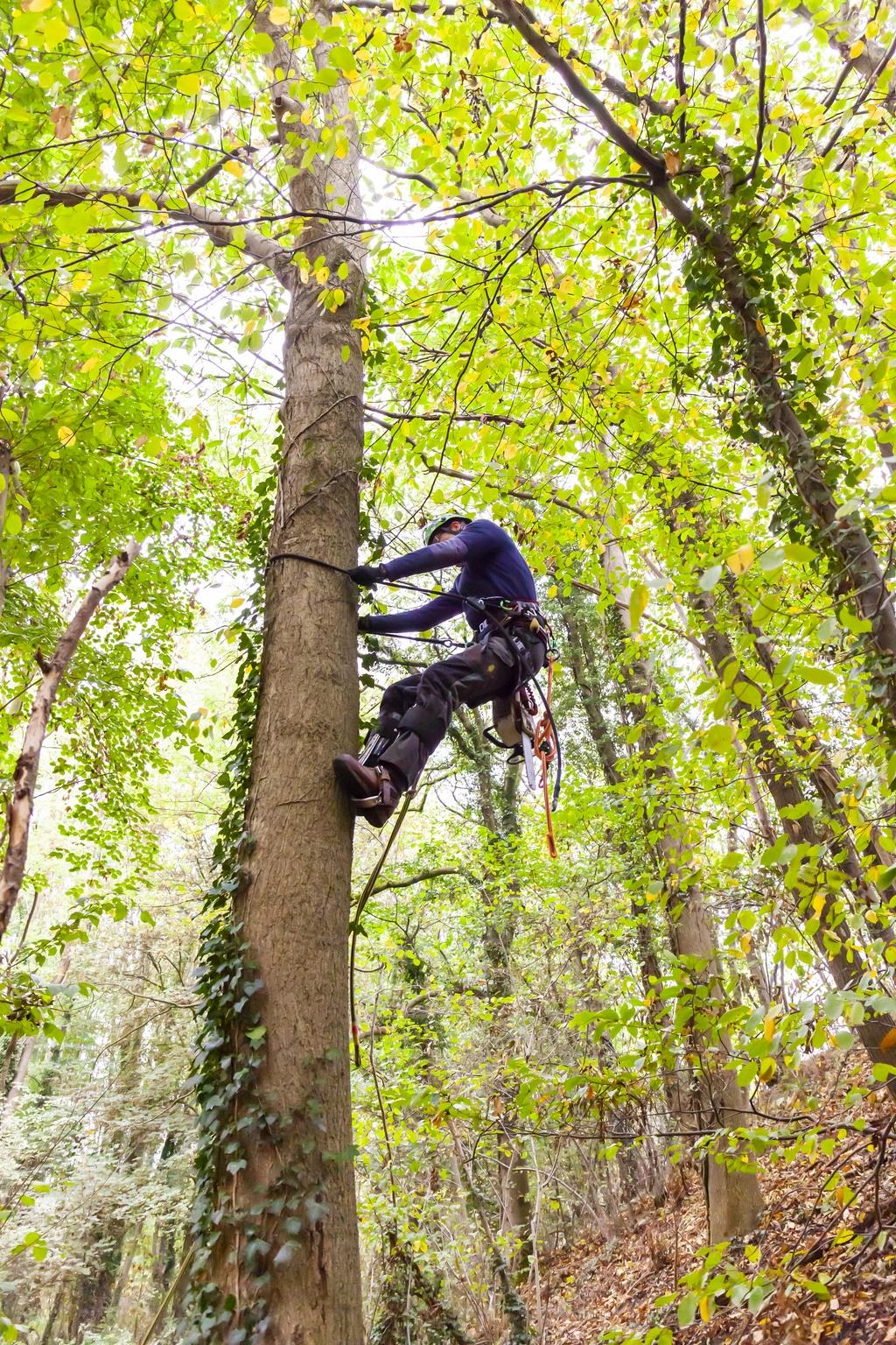 peters bomenservice, beek, zuid limburg, slider, bomen, klimmen