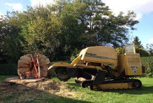 verwijderen stronk, peters bomenservice