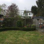 snoeien leiboom, leibomen, peters bomenservice, beek, zuid limburg, westelijke mijnstreek, onderhoud,