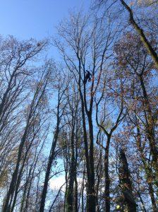 Onderhoudssnoei, snoeien bomen, peters Bomenservice, beek, zuid limburg, westelijke mijnstreek, gratis advies en offertee