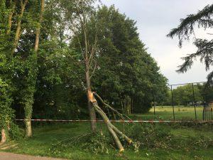 snoeien boom, plakoksel, peters bomenservice, beek, zuid Limburg, westelijke mijnstreek