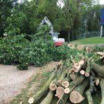 rooien van bomen, peters bomenservice, zuid limburg, gratis offerte