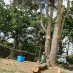 peters bomenservice, beek zuid limburg, snoei kap en zaagwerk, onderhoud bomen, houthakselaar op rupsonderstel, De Jensen A530 XL